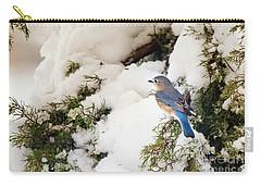 Carry-all Pouch featuring the photograph Bluebird On Snow-laden Cedar by Robert Frederick
