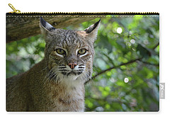 Bobcat Staring Contest Carry-all Pouch
