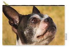Carry-all Pouch featuring the photograph Boston Terrier Portrait by Debbie Stahre