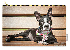 Boston Terrier Puppy Relaxing Carry-all Pouch by Stephanie Hayes