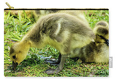Canada Goose Gosling Carry-all Pouch by Gary Whitton