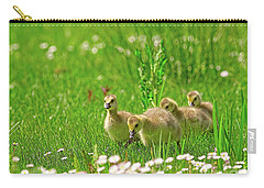 Carry-all Pouch featuring the photograph Canada Goose Goslings In A Field Of Daisies by Sharon Talson