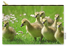 Carry-all Pouch featuring the photograph Canada Goose Goslings by Sharon Talson