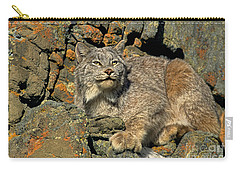 Carry-all Pouch featuring the photograph Canadian Lynx On Lichen-covered Cliff Endangered Species by Dave Welling