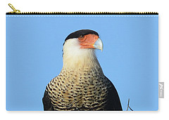 Carry-all Pouch featuring the photograph Caracara Portrait by Debra Martz