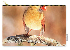 Carry-all Pouch featuring the photograph Cardinal Happy Holidays by Debbie Stahre