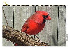 Cardinal Waiting For Spring Carry-all Pouch