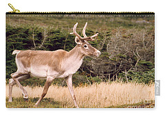 Caribou Carry-all Pouch