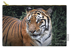 Carry-all Pouch featuring the photograph Cat In The Jungle by Charuhas Images