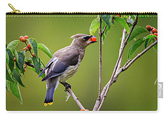 Carry-all Pouch featuring the photograph Cedar Waxwing 2 by Gary Hall