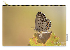 Chequered Blue Butterfly - Scolitantides Orion Carry-all Pouch by Jivko Nakev
