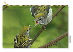 Chestnut-sided Warbler Being Fed Carry-all Pouch by Alan Lenk