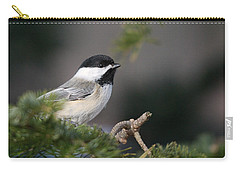 Carry-all Pouch featuring the photograph Chickadee In Balsam Tree by Susan Capuano