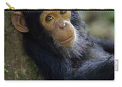 Chimpanzee Pan Troglodytes Baby Leaning Carry-all Pouch by Ingo Arndt