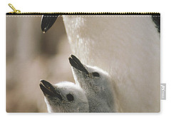 Chinstrap Penguin Pygoscelis Antarctica Carry-all Pouch by Tui De Roy