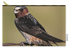 Carry-all Pouch featuring the photograph Cliff Swallow by Gary Lengyel