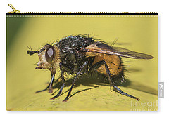 Close Up - Tachinid Fly - Nowickia Ferox Carry-all Pouch by Jivko Nakev