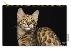 Closeup Bengal Kitty On Isolated Black Background Carry-all Pouch by Sergey Taran