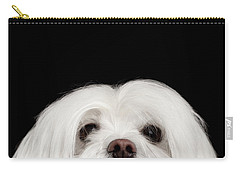 Closeup Nosey White Maltese Dog Looking In Camera Isolated On Black Background Carry-all Pouch