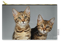 Closeup Portrait Of Two Bengal Kitten On White Background Carry-all Pouch by Sergey Taran