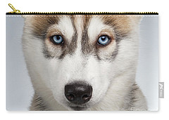 Closeup Siberian Husky Puppy With Blue Eyes On White  Carry-all Pouch by Sergey Taran