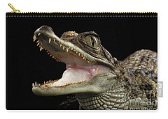Closeup Young Cayman Crocodile, Reptile With Opened Mouth Isolated On Black Background Carry-all Pouch by Sergey Taran