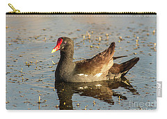 Carry-all Pouch featuring the photograph Common Gallinule by Robert Frederick