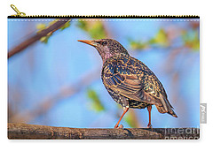 Common Starling - Sturnus Vulgaris Carry-all Pouch by Jivko Nakev