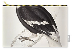 Concave Hornbill Carry-all Pouch by John Gould