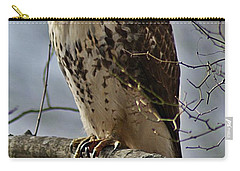 Cooper's Hawk 2 Carry-all Pouch by Joe Faherty
