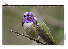 Costa's Hummingbird, Solano County California Carry-all Pouch