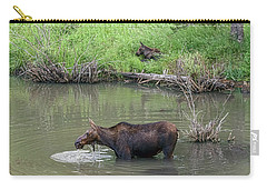 Carry-all Pouch featuring the photograph Cow Moose And Calf by James BO Insogna