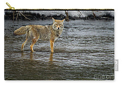 Coyote In The Madison River-signed-#0635 Carry-all Pouch