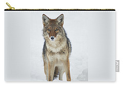 Coyote Looking At Me Carry-all Pouch