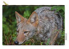 Coyote On The Hunt Carry-all Pouch