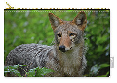 Coyote On The Prowl  Carry-all Pouch