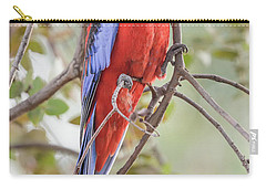Crimson Rosella 01 Carry-all Pouch