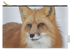Curious Fox Carry-all Pouch by Jack Bell