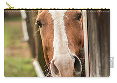 Curious Horse Carry-all Pouch