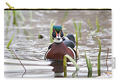 Carry-all Pouch featuring the photograph Curious Wood Duck by Lynn Hopwood