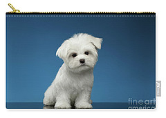 Cute Pure White Maltese Puppy Standing And Curiously Looking In Camera Isolated On Blue Background Carry-all Pouch by Sergey Taran