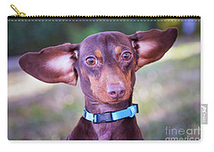 Dachshund Ears Up Carry-all Pouch by Stephanie Hayes
