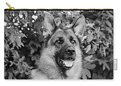 Carry-all Pouch featuring the photograph Drake Watching by Sandy Keeton