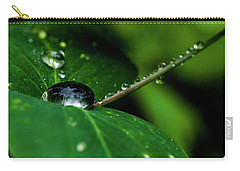 Carry-all Pouch featuring the photograph Droplets On Stem And Leaves by Darcy Michaelchuk