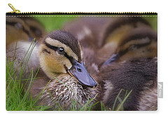 Carry-all Pouch featuring the photograph Ducklings Cuddling by Susan Candelario