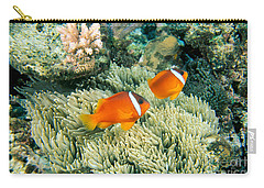 Amphiprion Melanopus Photographs Carry-All Pouches