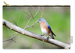 Carry-all Pouch featuring the photograph Eastern Bluebird by George Randy Bass
