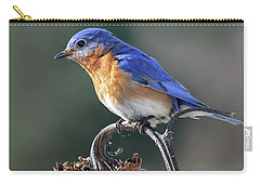Eastern Bluebird In Spring Carry-all Pouch
