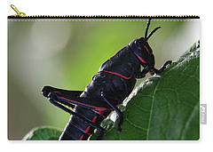 Eastern Lubber Grasshopper Carry-all Pouch by Richard Rizzo