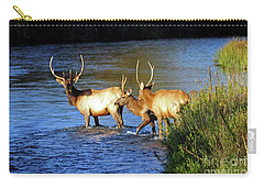 Elk Carry-all Pouch by Cindy Murphy - NightVisions